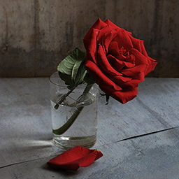 Поздравления с Днём Рождения - Страница 2 Rosa